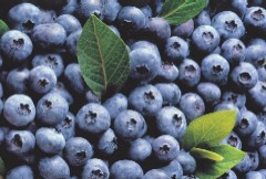 Diabetes cover story: Photo of blueberries